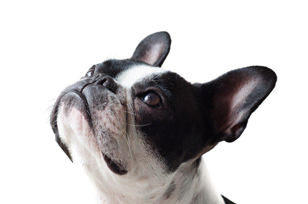 Dispositifs déjections canines à Locquirec